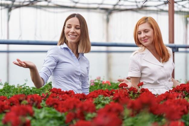 gesellschaft kaufen in österreich arbeitnehmerüberlassung bedingungen gmbh deckmantel kaufen Angebote zum Firmenkauf